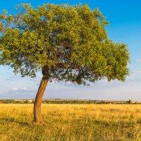 Одинокое дерево :: Любовь Потеряхина