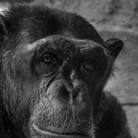 В зоопарке :: Vasiliy V. Rechevskiy
