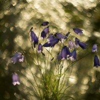 утро в лесу :: Виктор Батавин
