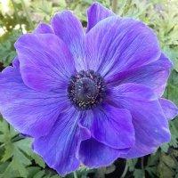 Синенький цветочек :: Kira Martin