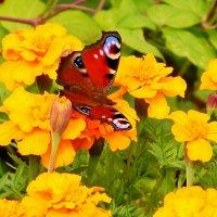 краски лета :: linnud