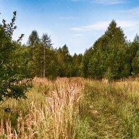 в лесу :: Alexandr
