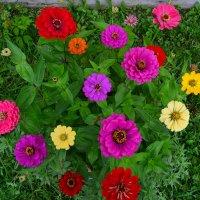 радуга цветов :: Светлана Пантелеева