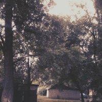 Прогулочка :: Valeriya Voice