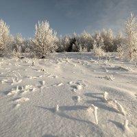 Морозно :: Татьяна Попова