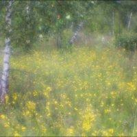 После дождичка :: galina bronnikova