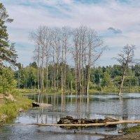 Запруда на реке :: Дмитрий Конев