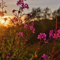 Ах, эти летнии закаты.. :: Ирэна Мазакина