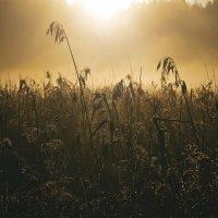 И эти летнии рассветы... :: Ирэна Мазакина