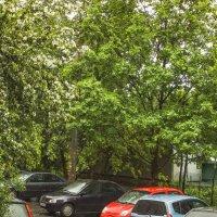 Яблоня и авто :: Виталий