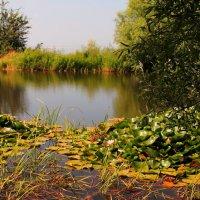 Цветущие кувшинки и горное озеро в лучах утреннего света. :: Vladimir 070549