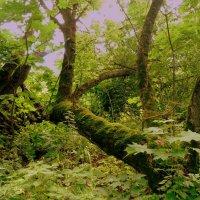 в лесу у озера :: Александр Прокудин