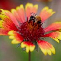 летние цветы 7 :: Дмитрий Барабанщиков
