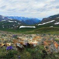 Музыка синих гор. Южный Алтай. За Карагемским перевалом :: Natalya Danilova
