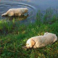 Не так и жарко! :: Андрей Лукьянов