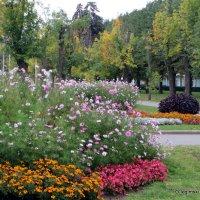 цветочные истории,городские цветы,клумбы :: Олег Лукьянов