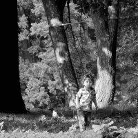 под большими деревьями //или деревья-дедушки// :: sv.kaschuk