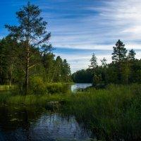 Лесное озеро :: Евгений Астахов
