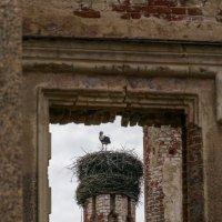 Гнездо на руинах :: РАМ Стрельцов