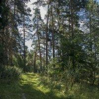 Прозрачный лес :: Яков Реймер