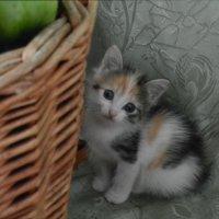 Кицюня (кисонька) :: Ольга