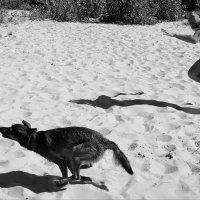 беги Люк, беги.. :: Айдимир .
