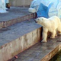 """Серия """" Белые медведи """" .  """"Меня даже не зовут на обед"""" ! :: Мила Бовкун"""