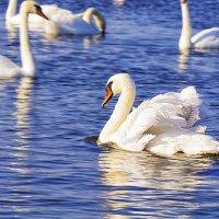 Лебединое озеро.Евпатория. :: Аркадьевна Кокарева
