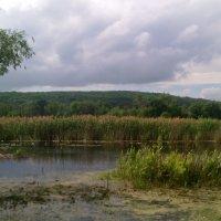 Река Битюг. :: Ольга Кривых