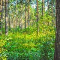 Солнце залило лес светом :: Света Кондрашова