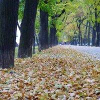 Скоро осень,за окнами август.. :: Alexey YakovLev
