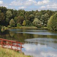 Северный Терлецкий пруд :: Длинный Кот