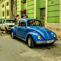 Beetle :: Arman S