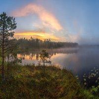 Сосны на берегу озера. :: Фёдор. Лашков