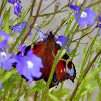 бабочка в цветах :: linnud