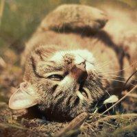 Без кота и жизнь не та :: Оксана Суярова