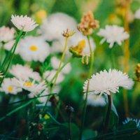 Цветы :: Екатерина Казакова