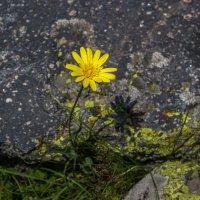 IMG_3785 цветок :: Олег Петрушин