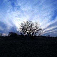 Вечное дерево :: Александр Волокиткин