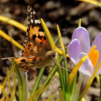 Весна :: Алла