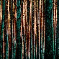 Сосновый лес на рассвете. :: Валерий Гудков