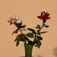 Цветы :: Gal` ka