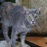 Страшнее кошки зверя нет :: Ирина Бруй