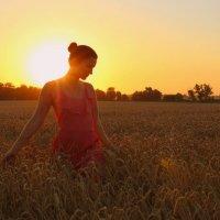 В пшенице :: оксана косатенко