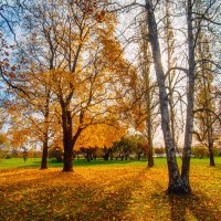 Осень на Разливе :: Виталий
