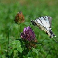 Лето - пора цветов и бабочек... :: *MIRA* **