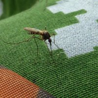 комар :: Алексей Логинов