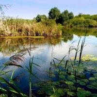 озерцо с островком :: Александр Прокудин