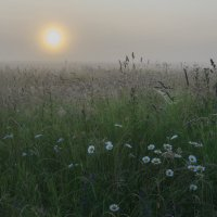 Травы на рассвете :: Валентин Котляров
