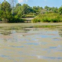 Тина покрыла воду :: Света Кондрашова